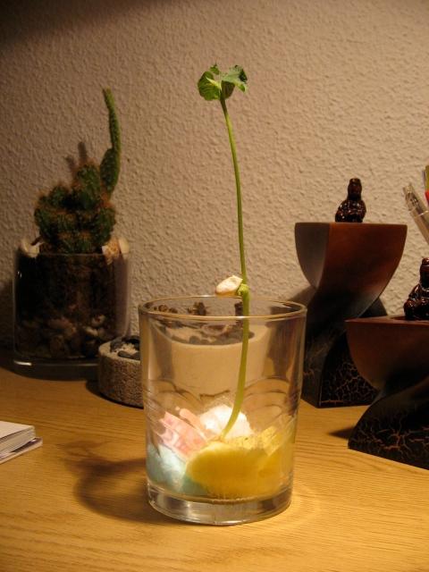 plantita Reiki